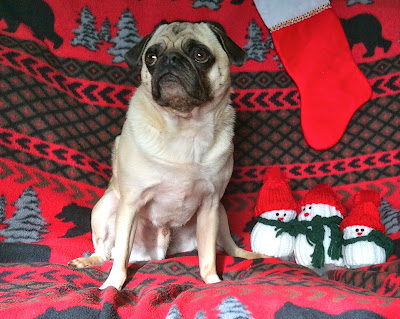 Liam the pug with his Christmas snowmen
