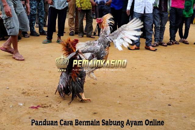 Panduan Cara Bermain Sabung Ayam Online