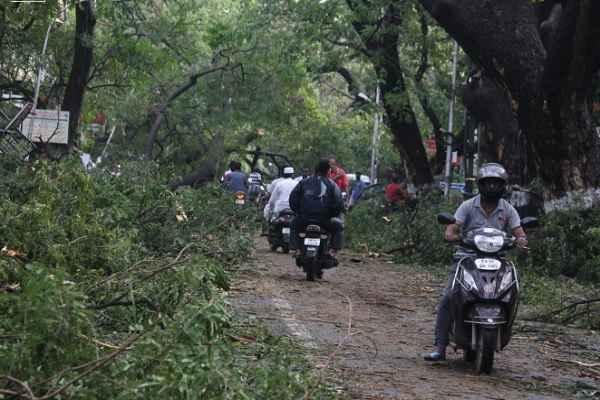 'वरदा' तूफान से चेन्नई में तबाही, जंगल जैसा मंजर