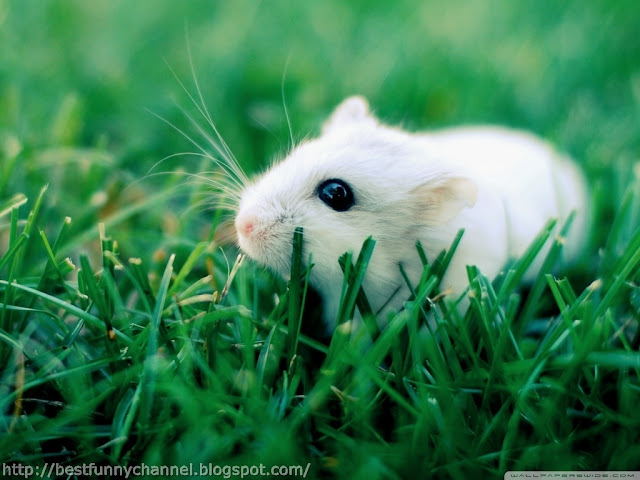 Cute white mouse.