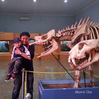 kerangka-badak-di-museum-zoologi