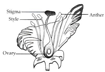 diagram of the longitudinal section of a flower