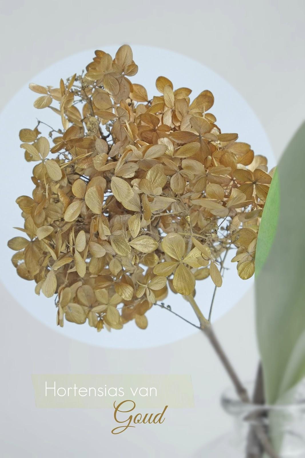 Hortensia's van Goud - Diy