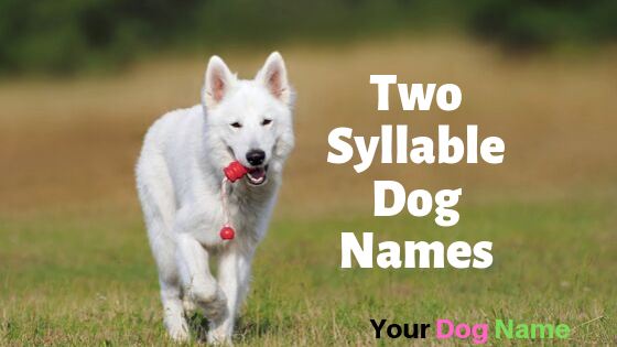 Two Syllable Names For Dogs