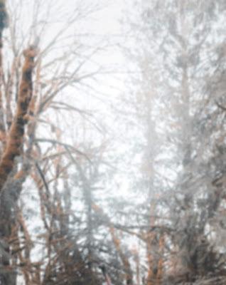 Foggy White Blur Background Free Stock Image