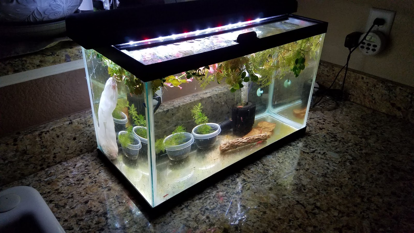 A Gamer S Wife How To Set Up An Easy Cherry Shrimp Tank For Breeding