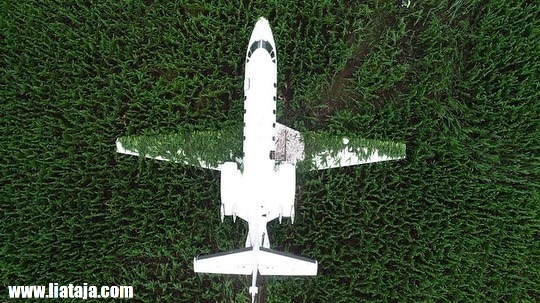 CESSNA 560 Mendarat Darurat di Lahan Jagung