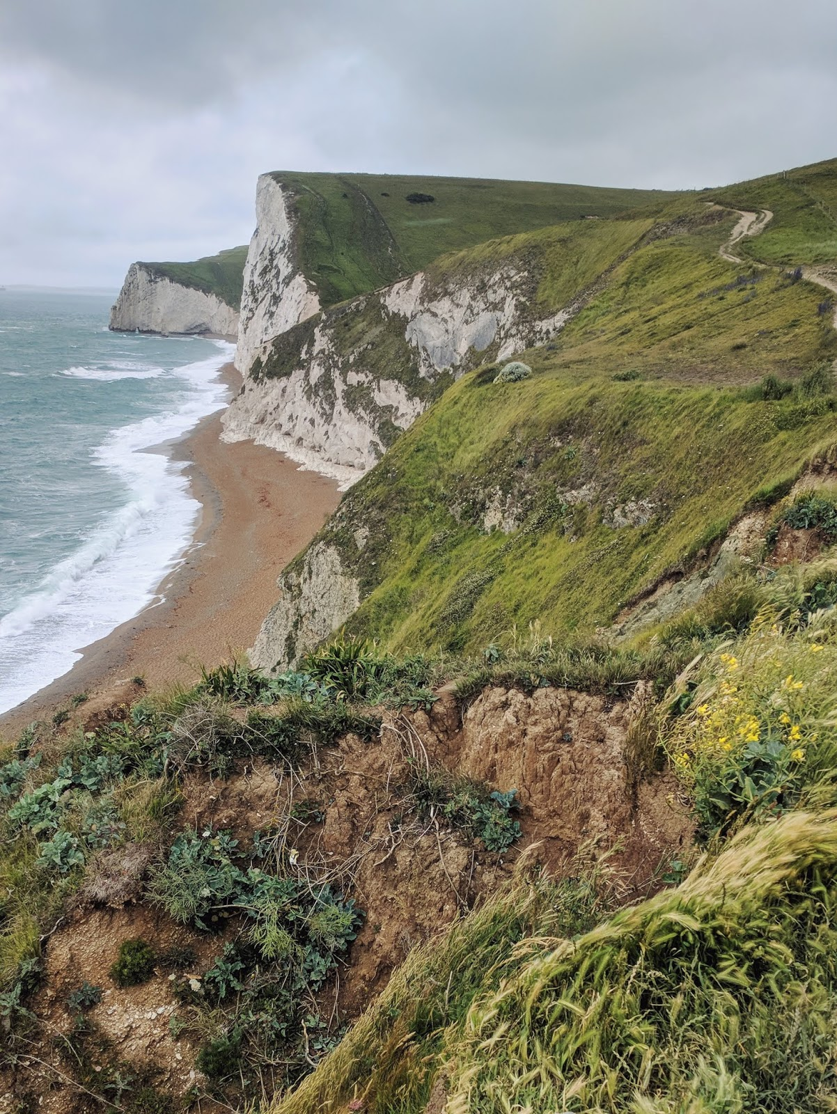 the lush grass lining the cliffs of Jurassic Coast