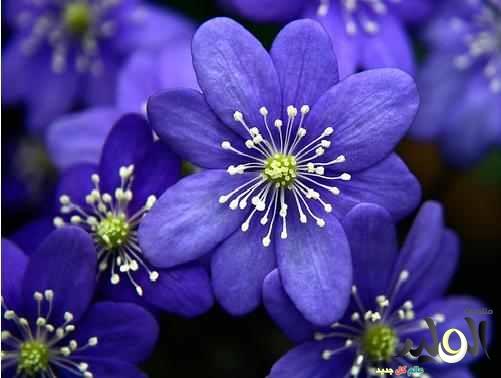 صور زهور جميلة وازهار ملونة
