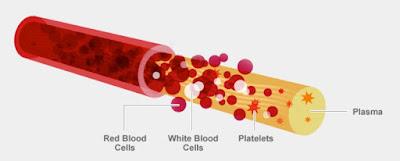 Classification of Human Blood, human blood, heart, circulation, plasma,