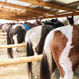 El Bronco, riitta reissaa, horsexplore