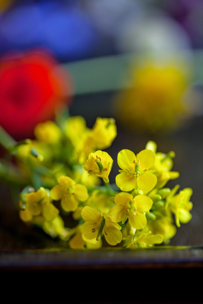Crackers on the Couch: Edible Flowers, Pak Choi Blossoms