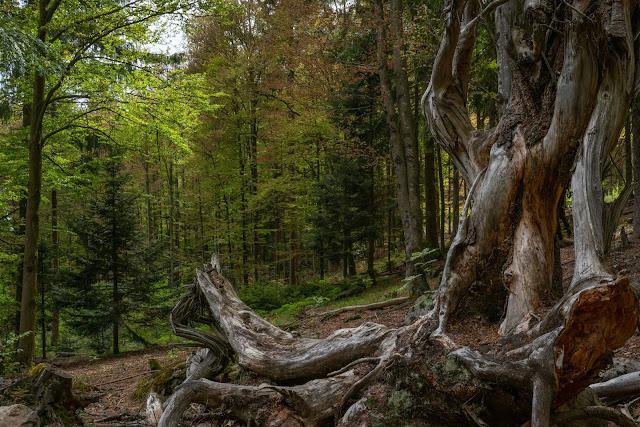Kaitersberg Panoramaweg Ar06 | Wandern im Lamer Winkel im Bayerischen Wald 21