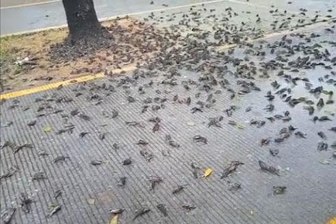 Fenomena Jatuh Masal Burung Pipit Menggambarkan Bahaya Perubahan Iklim