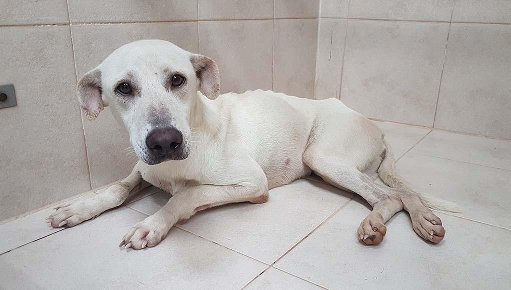 Καβάλα: Πήγαν να βοηθήσουν κακοποιημένο ζώο και «έφαγαν» πρόστιμα