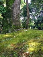 Particolare del muschio che ricopre parte del giardino