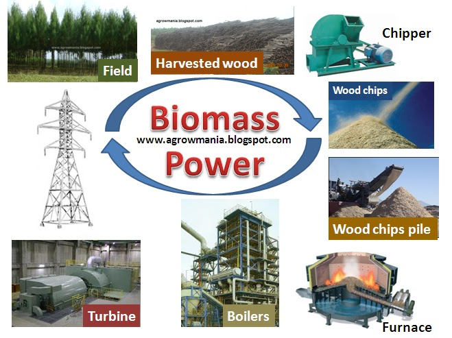 Image Result For  Ton Biomass
