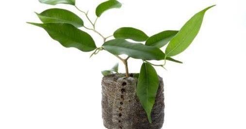 Piante Da Appartamento Greenme.Mela Verde News 15 Piante Da Appartamento In Grado Di Purificare