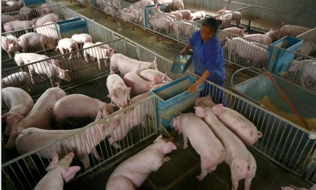 Cientistas identificam em porcos, novo vírus da gripe com potencial de pandemia
