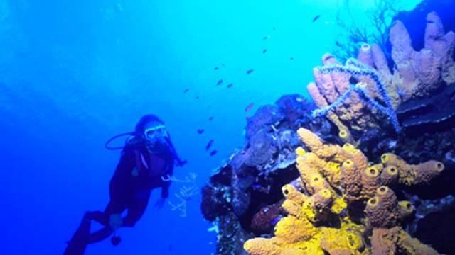 ท่องเที่ยว, แนวหินปะการัง, มัลดีฟส์, สถานที่ดำน้ำ, สถานดำน้ำทั่วโลก, อันดับสถานที่ดำน้ำ, แกรนด์เติร์ก หมู่เกาะเติร์กและหมู่เกาะเคคอส (Grand Turk, Turk & Caicos)
