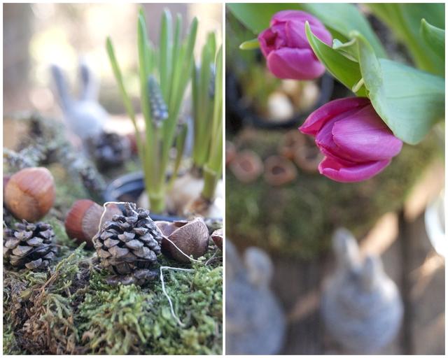 Filzhasen und Mooskranz mit Haselnüssen, Muscari und Tulpen