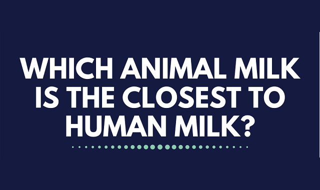 Which Animal milk is the most similar to the Human milk?