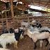 Bersantai Sambil Menjamu Selera di PUNCAK MUTIARA CAFE.. Melawat Ladang dan Kawasan