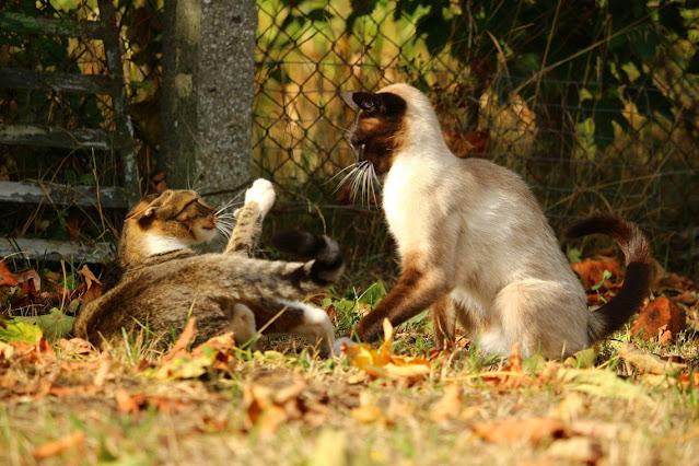 ANIMALES: ¿Qué hacer si tu perro o gato se pelea con otro animal?