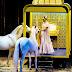 Il nuovo spettacolo del Circus Krone: Mandana, la principessa dei cavalli