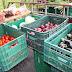 Produtores familiares de orgânicos do Paraná são maioria entre os clientes do Tecpar