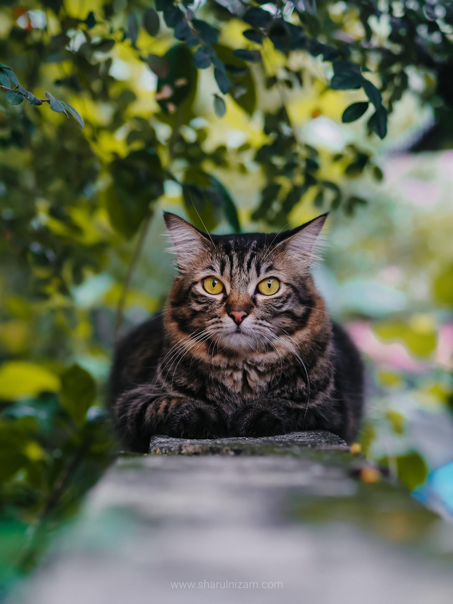 Kucing Yang Suka Buat Dek