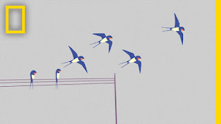 Πόσα από αυτά τα πουλιά γνωρίζετε; (ΒΙΝΤΕΟ)
