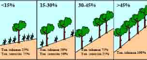Teknik konservasi tanah secara vegetatif  merupakan pemanfaatan tanaman/vegetasi maupun sisa-sisa tanaman sebagai media pelindung tanah dari erosi, penghambat laju aliran permukaan, peningkatan kandungan lengas tanah, serta perbaikan sifat-sifat tanah, baik sifat fisik, kimia maupun biologi. Di Indonesia, teknik konservasi tanah dikhususkan untuk melindungi permukaan tanah, peningkatan kapasitas infiltrasi serta laju aliran permukaan yang terkontrol sehingga material dan unsur hara di dalam tanah terhambat (Agus et al., 1999).
