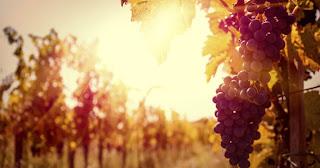 #2. Jakim winem chcesz być?