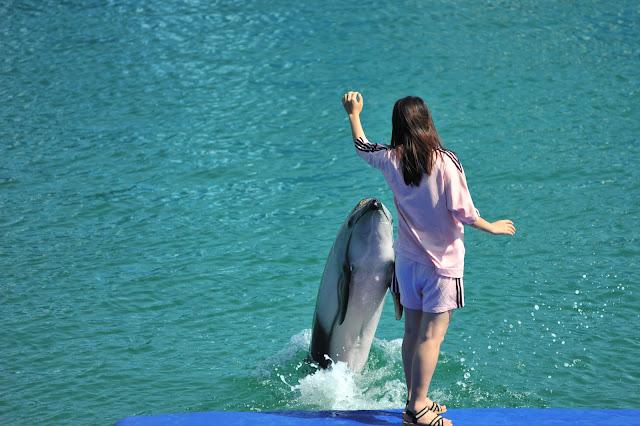 Mãn nhãn show cá heo tại Vin Wonder Nha Trang