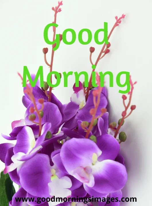 Good Morning Images hindi