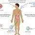 Association between parasites and hosts