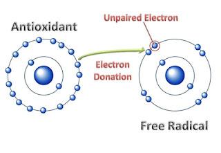 radikal bebas mencari elektron dari atom lain