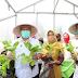 Kebun Sauyunan, Berketahanan Pangan Melalui Urban Farming