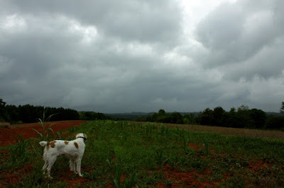 Dog looking at cloudy sky