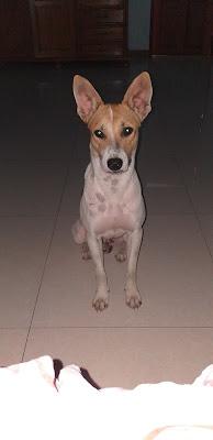 Unser lieber Hund Loong