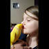 Sweet Parakeet Gives Goodnight Kisses