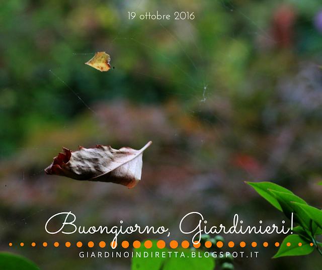 foglie d'autunno - l'agenda del giardino e del giardiniere - un giardino in diretta