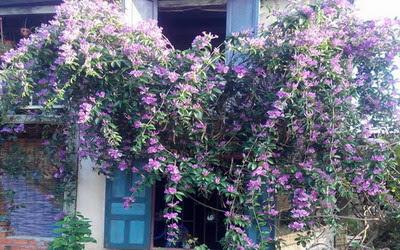 Bức tường trổ hoa