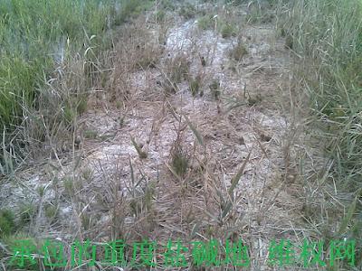 新疆察布查尔县61户承包改造好的万亩土地被强行掠夺的控告