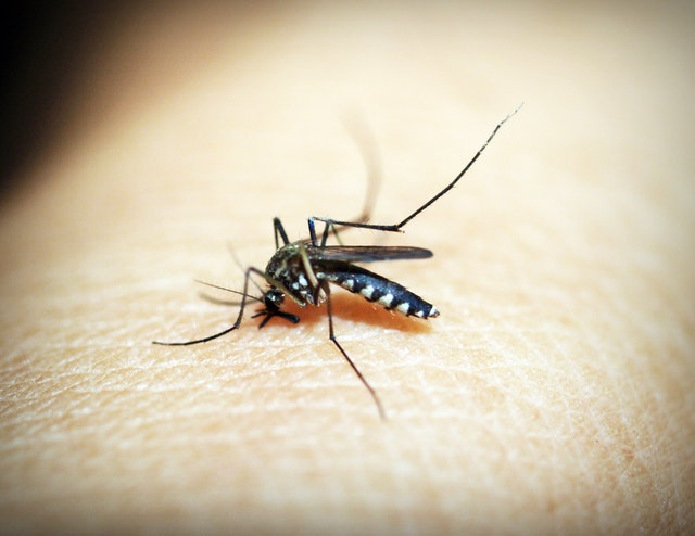 Dengue Fever Symptoms Causes Precautions And Home Treatments