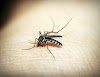 Dengue Fever: Symptoms, Causes, Precautions And Home Treatments