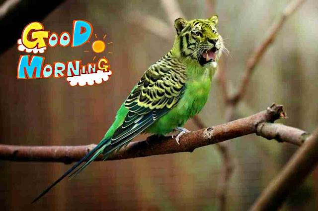 funny good morning image of parrot and tiger