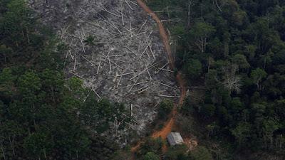 Explotación selva Amazonas Brasil