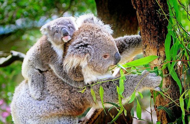 Kreuzfahrt Australien